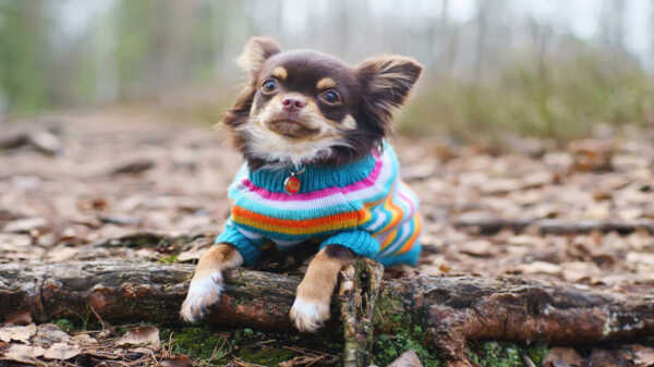 Business Plan: Marketing Dog Clothes