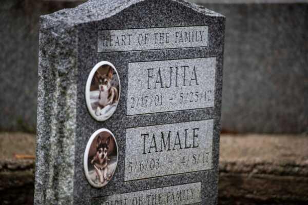 Pet Cemetery – High Sensitivity Business