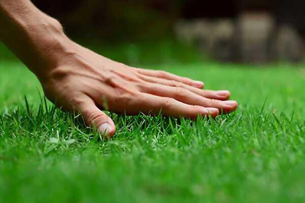 Start a lawn distributor business